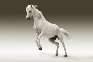 cheval sport