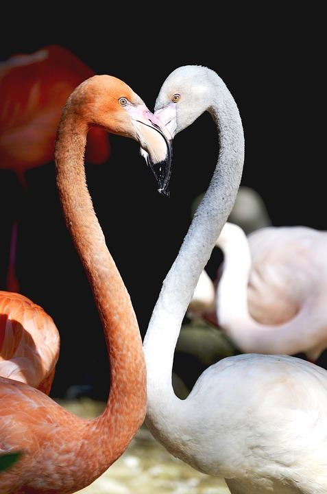 flamingo-1294660_960_720
