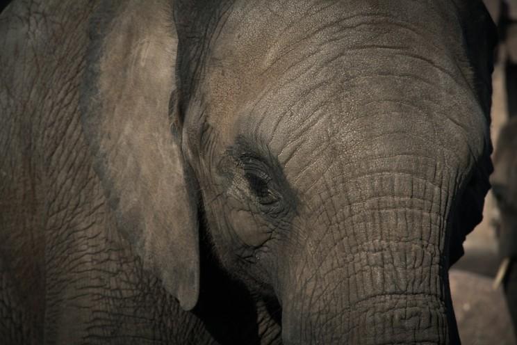 elephant-670645_960_720