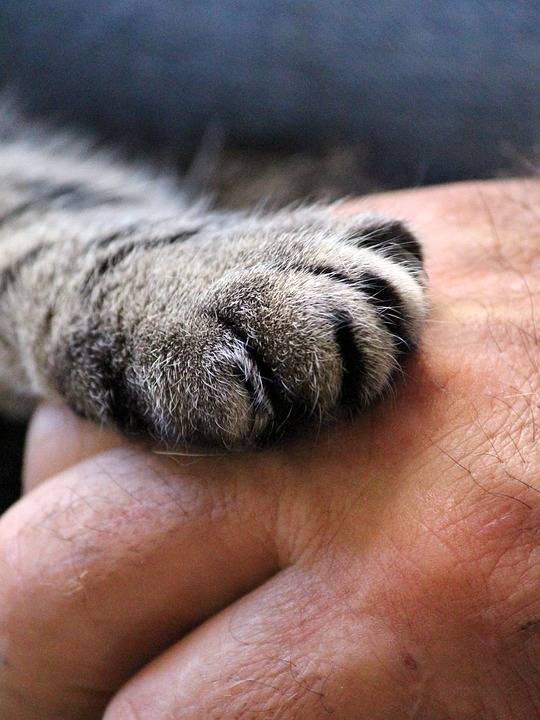 cats-paw-1375792_960_720