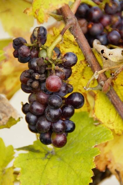 wine-190833_960_720