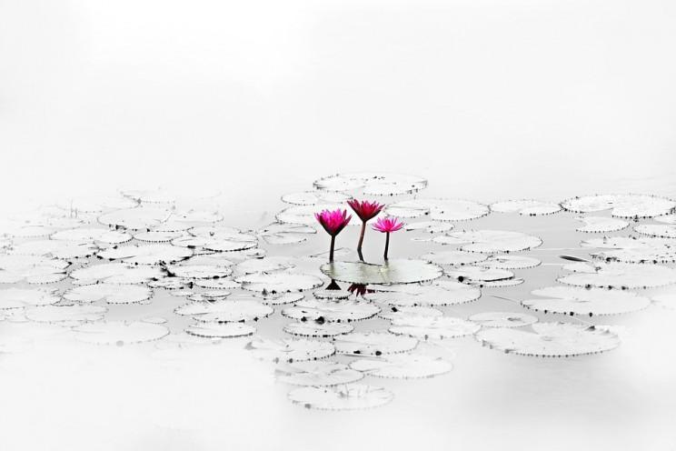 lotus-1700557_960_720