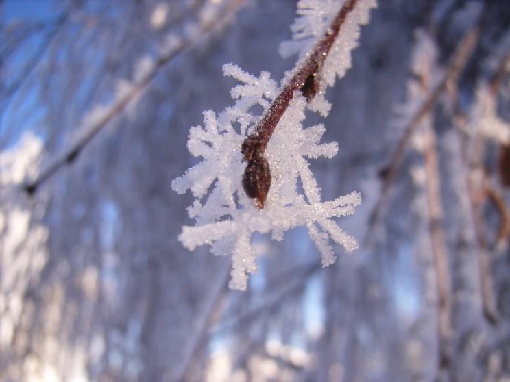 cristaux branche