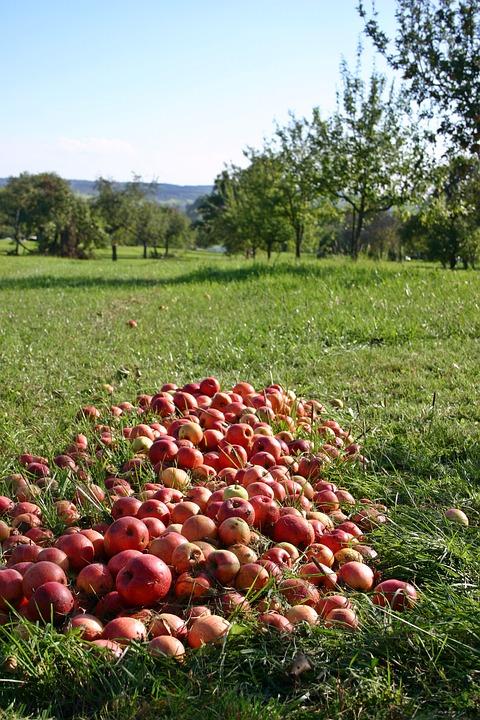 al fruits6