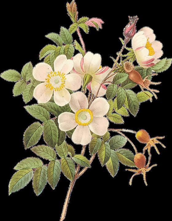 flower-2654929_960_720