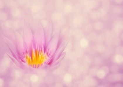 lotus-4228826_960_720