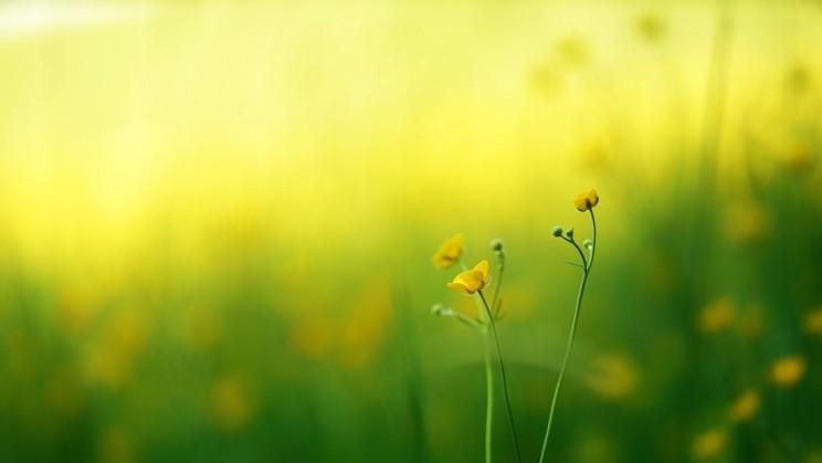 jaune pré